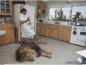 The family that adopted in their homes to live lion (Photo)