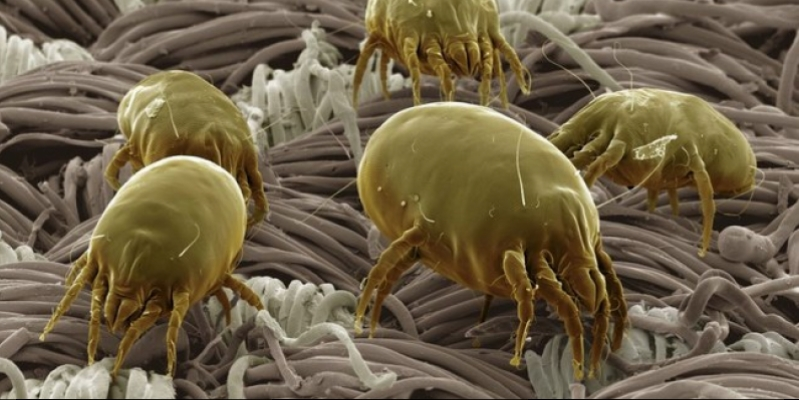 Thats the best night of sleep dust mites in the skin of our couch (Video)